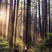 Pacific Spirit Park.BC